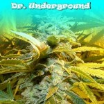 DR UNDERGROUND - King Kong
