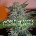 WORLD OF SEEDS - Yumbolt 47