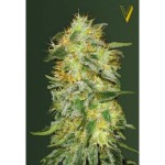 Victory Seeds - Original Lemon Skunk