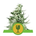 ROYAL QUEEN SEEDS - Royal Critical Automatic®
