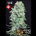 PURE SEEDS - Viking Haze