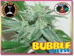 BIG BUDDHA SEEDS - Bubble Cheese