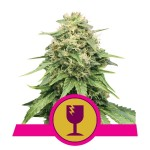 ROYAL QUEEN SEEDS - Critical®