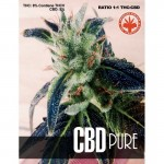 PURE SEEDS - CBD Pure