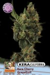 KERA SEEDS - Cherry Grapefruit