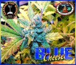 BIG BUDDHA SEEDS - Blue Cheese
