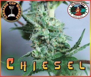 BIG BUDDHA SEEDS - Chiesel Automatic