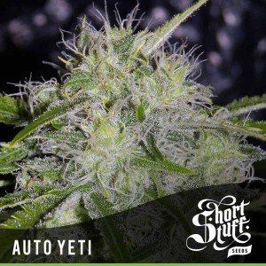 SHORT STUFF SEEDBANK - Auto Yeti