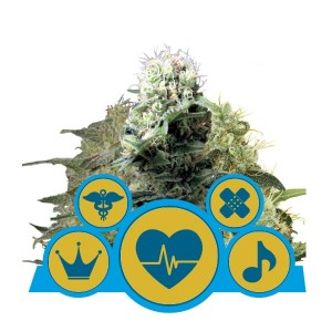 ROYAL QUEEN SEEDS - CBD Mix
