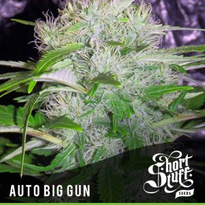 SHORT STUFF SEEDBANK - Auto Big Gun