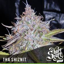 SHORT STUFF SEEDBANK - Auto Tha Shiznit