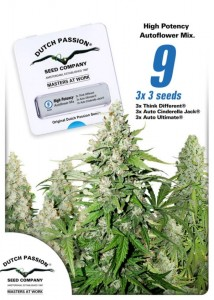 DUTCH PASSION - High Potency Auto Mix