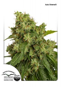 DUTCH PASSION - Auto Xtreme
