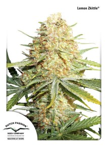 DUTCH PASSION - Lemon Zkittle®