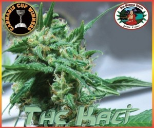 BIG BUDDHA SEEDS - The Kali