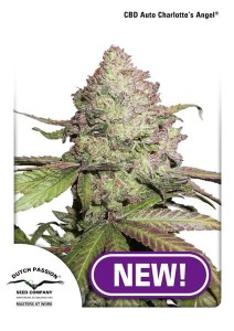 DUTCH PASSION - CBD Auto Charlotte's Angel®